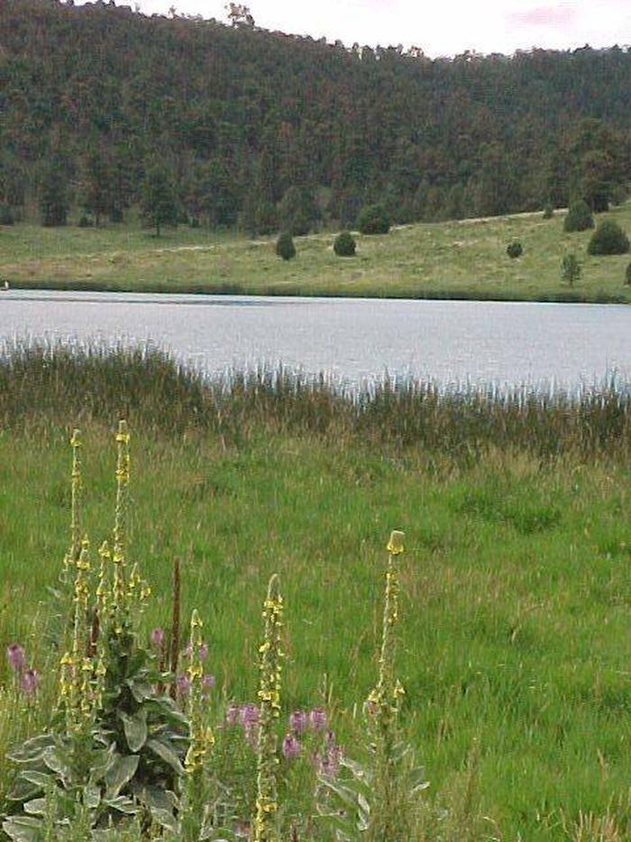 Landscape near Quemado Lake showing vegetation, pretty flowers
