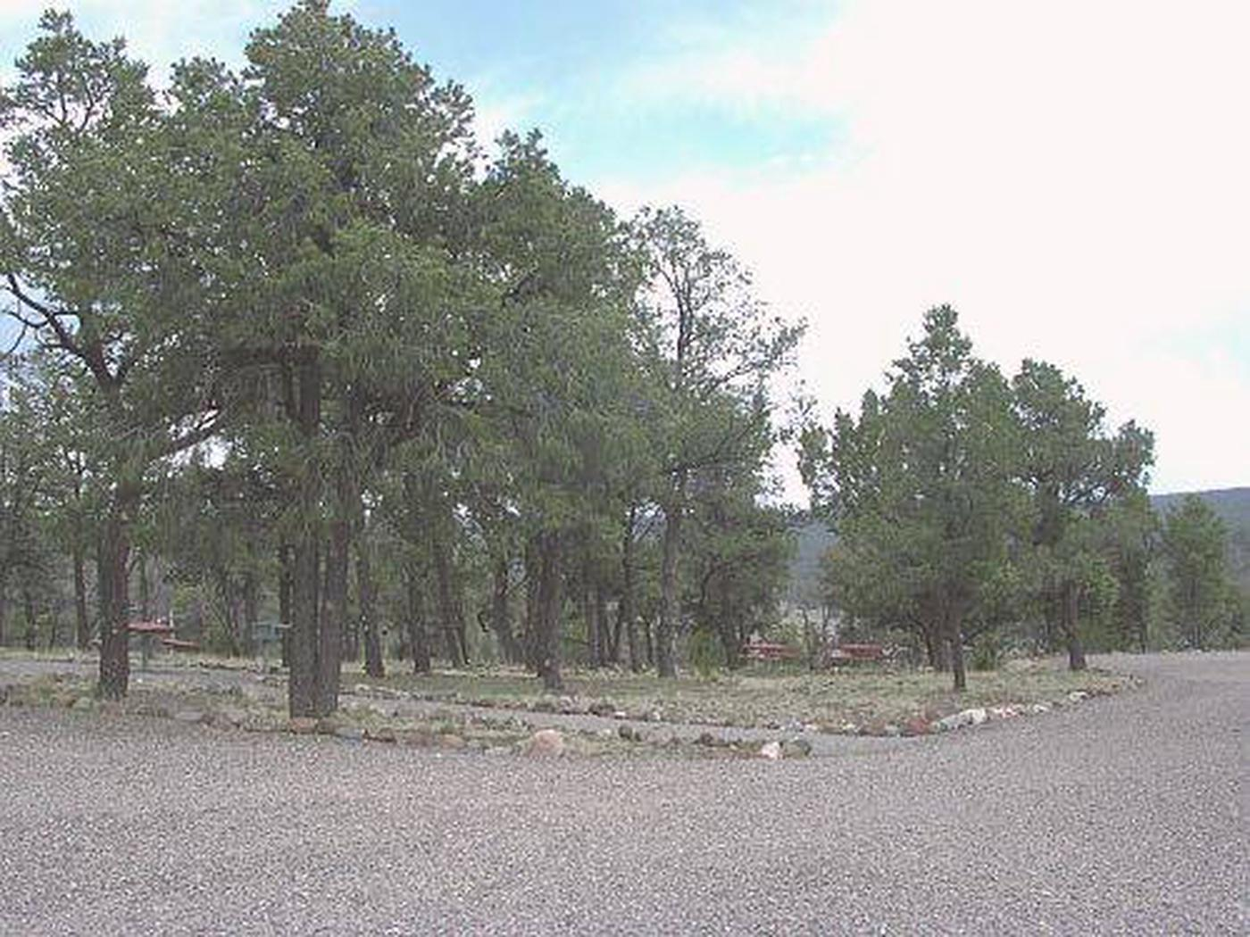 Showing Pinon Campground parking and tall trees