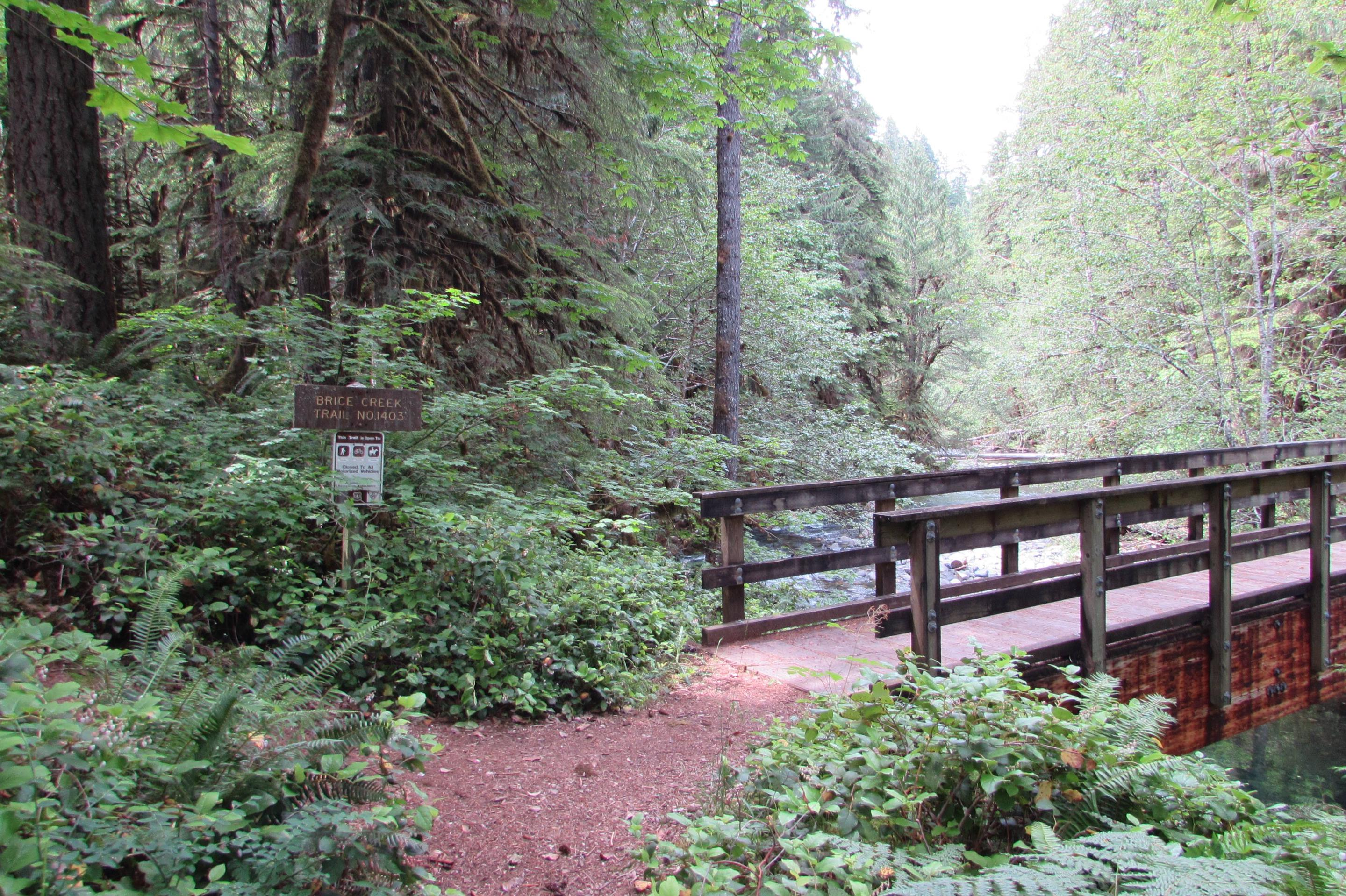 Brice Creek Trail BridgeBrice Creek and its scenic trail run along the whole campground