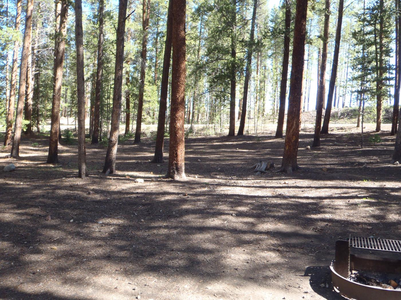 Molly Brown Campground, site 47 clearing