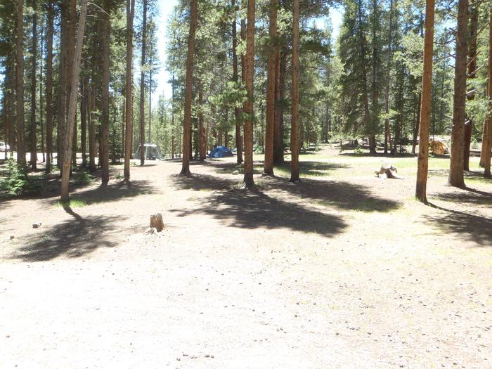 Molly Brown Campground, site 48 clearing