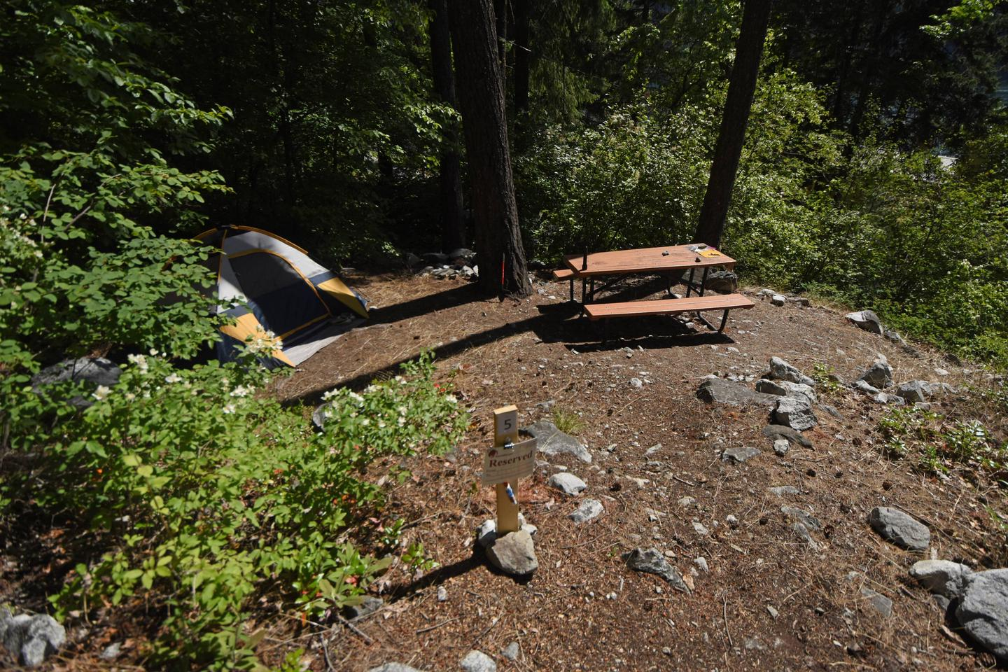 Campsite with picnic table in the woods.Purple Point Site 5