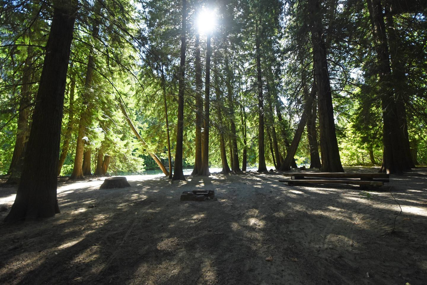 Campsite in cedar forest by riverHarlequin Group Site
