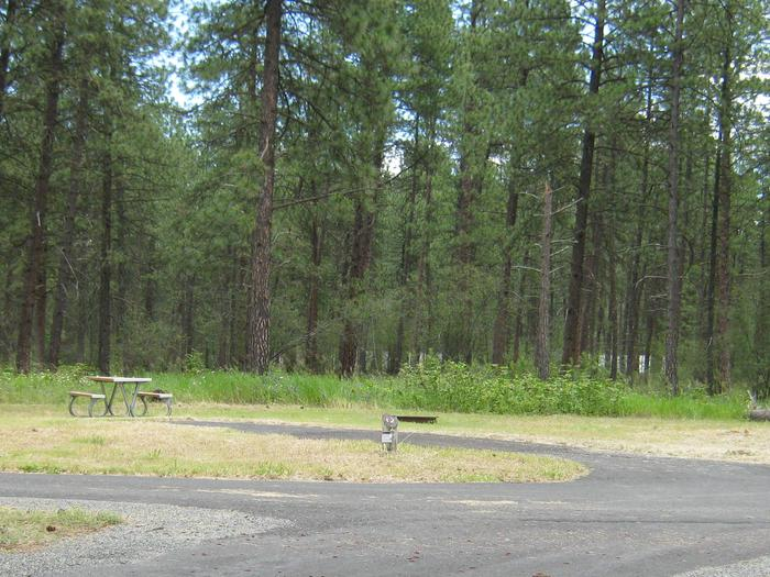 Pine trees in the back dropBack in paved parking