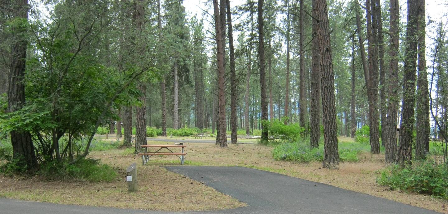 Site 32, Back inSite 32, Back in, Pine Trees in background