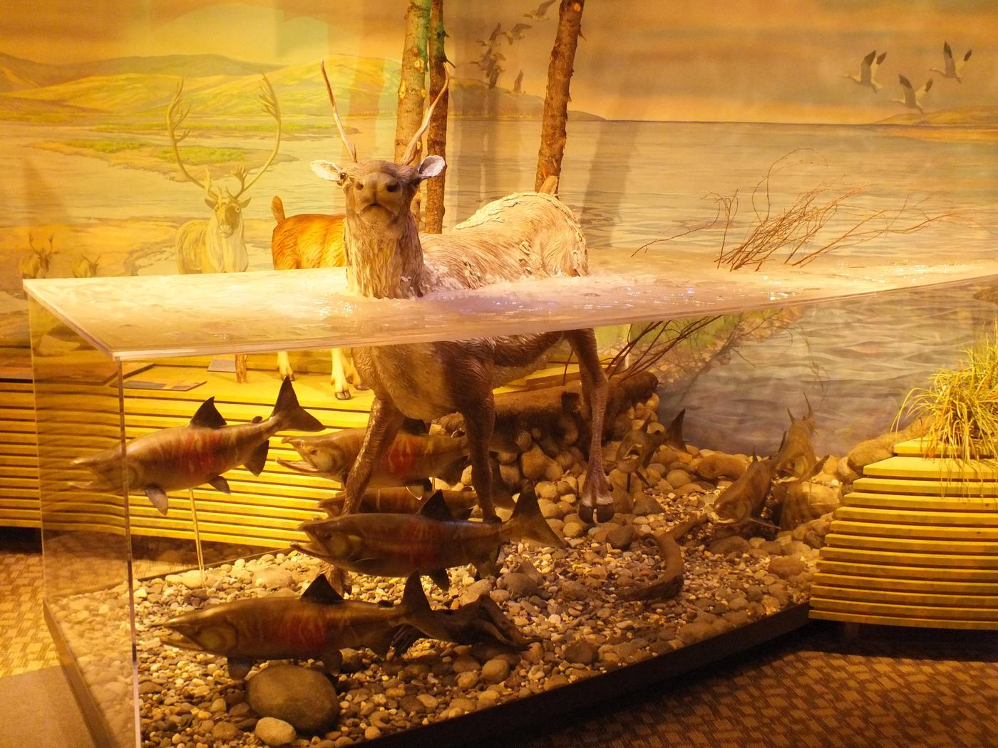 Museum displaysThe museum displays include natural and cultural displays