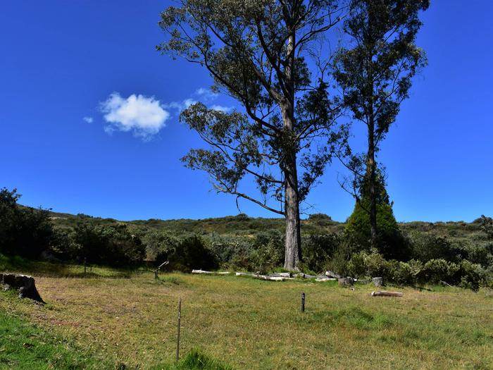 Hosmer GroveBeautiful views of the slopes of Haleakala