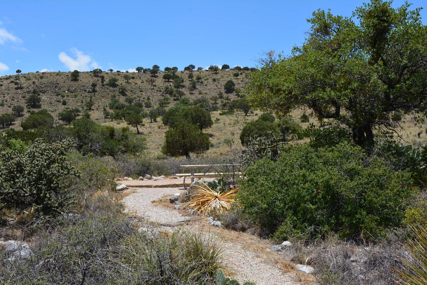 Footpath approaching campsite number seven from the east side of site, showing desert vegetation surrounding site.