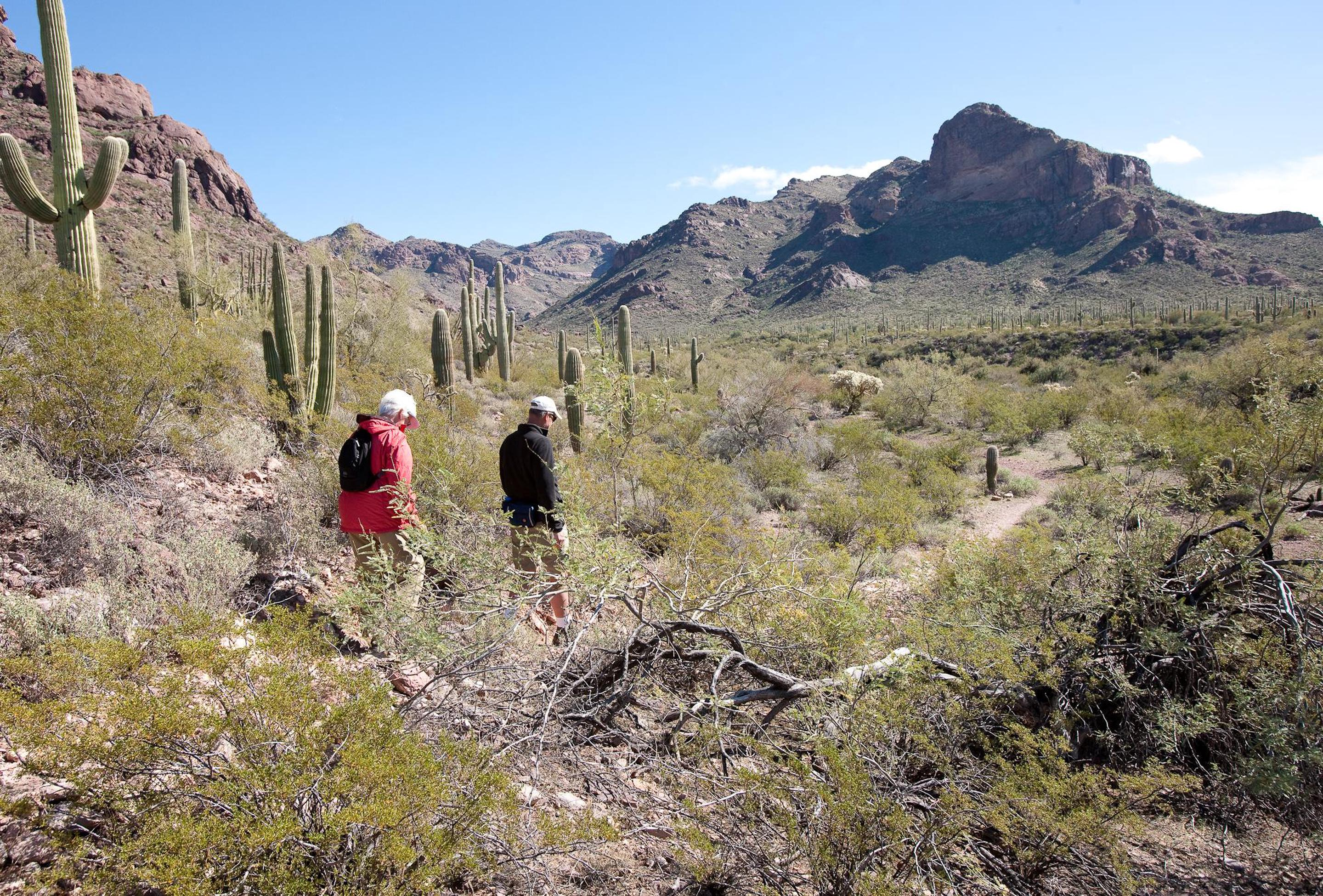 Hiking Alamo CanyonFrom the campground you can access the picturesque Alamo Canyon trail.