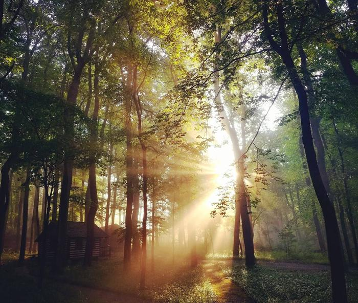 Morning sun shines through the hardwood forest in Camp Misty Mount.