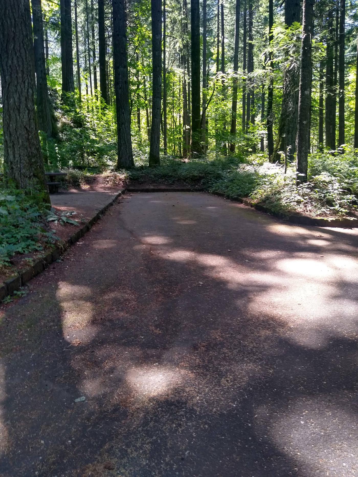 DrivewaySite #8-Wyeth Campground