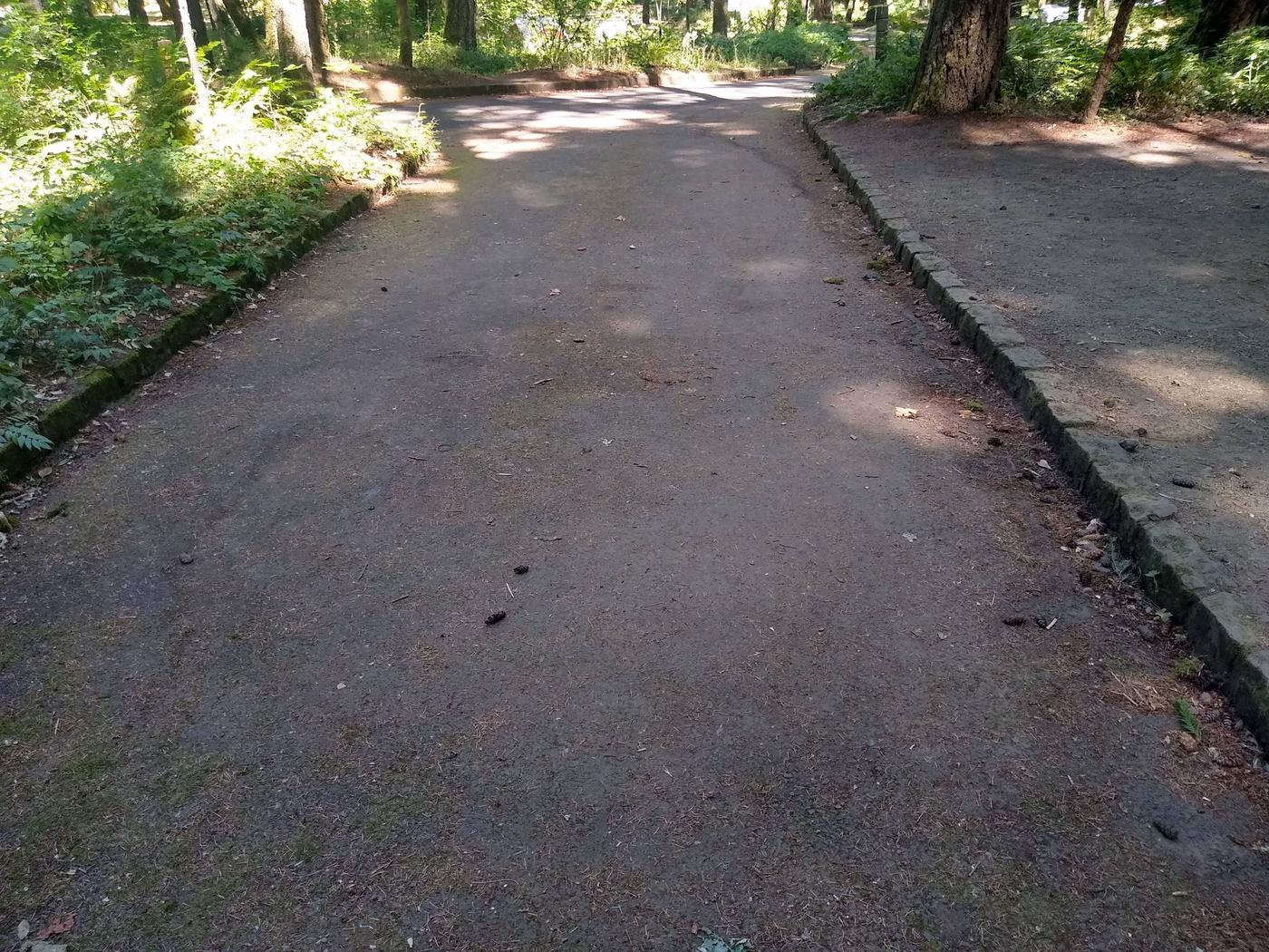 Driveway towards Loop RoadSite #8-Wyeth Campground