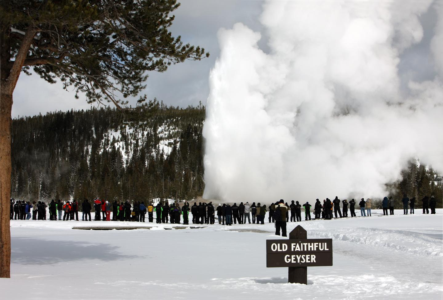 Old Faithful Geyser in winterWinter is a magical time to watch Old Faithful Geyser erupt