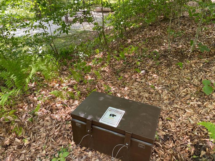 Bear Box by Site 13