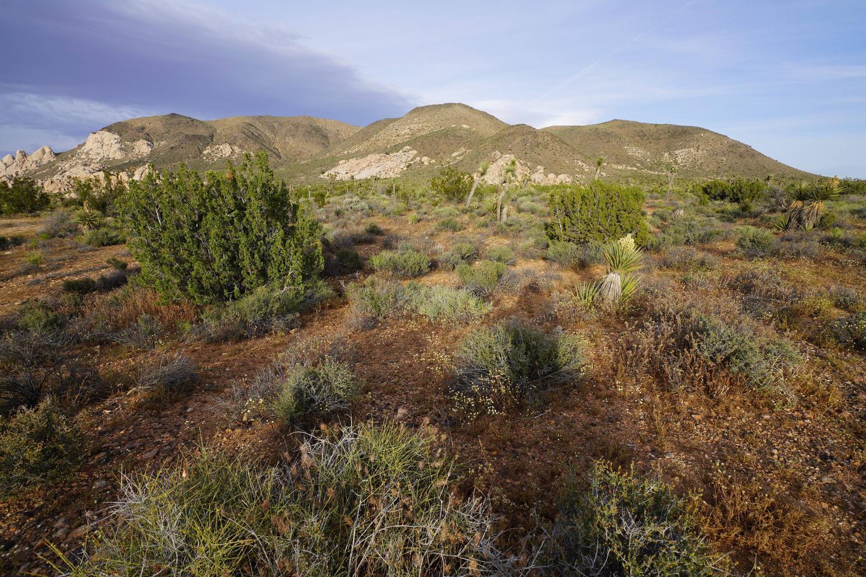 Ryan Mountain at Joshua Tree National ParkRyan Campground