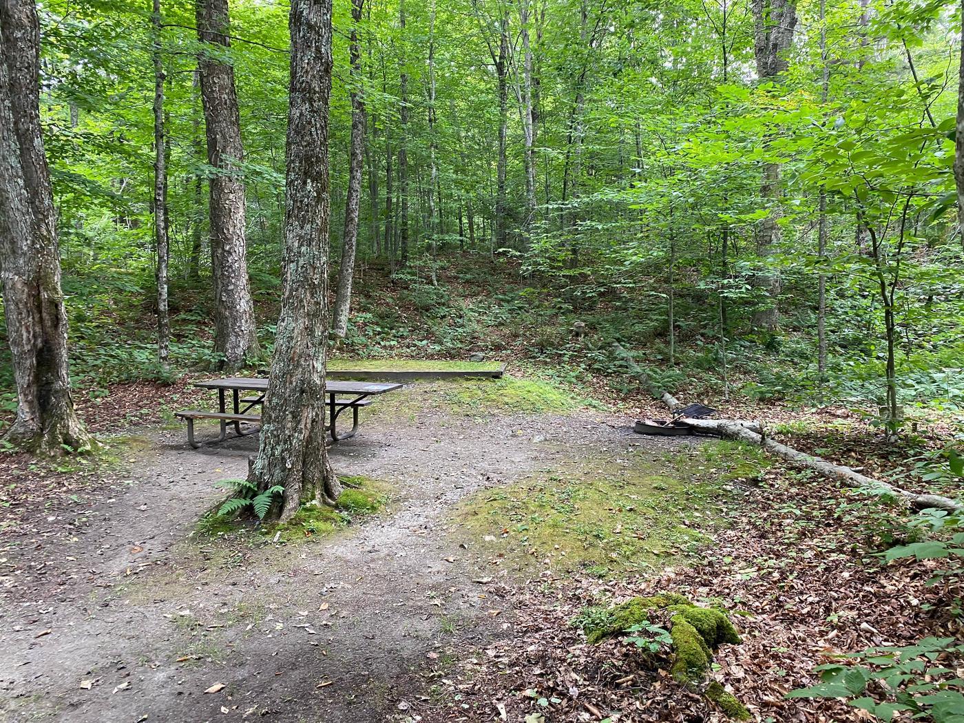 Campsite 14Site 14