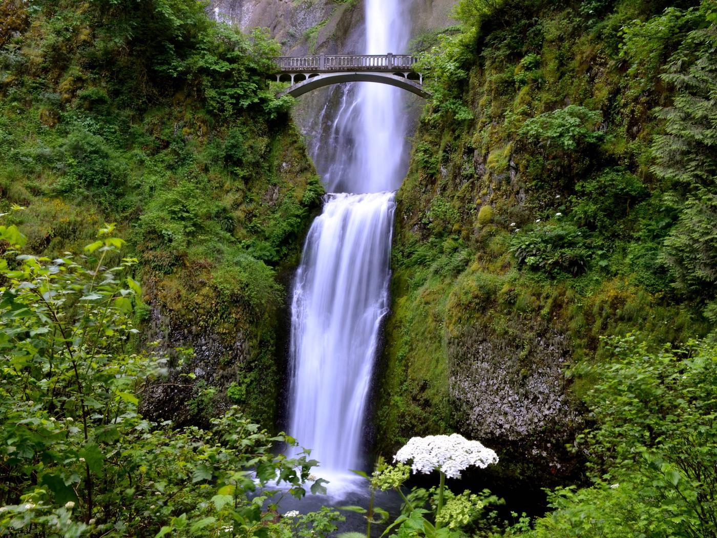 Multnomah Falls in the Columbia Gorge Scenic AreaImage of Multnomah Falls with a bridge