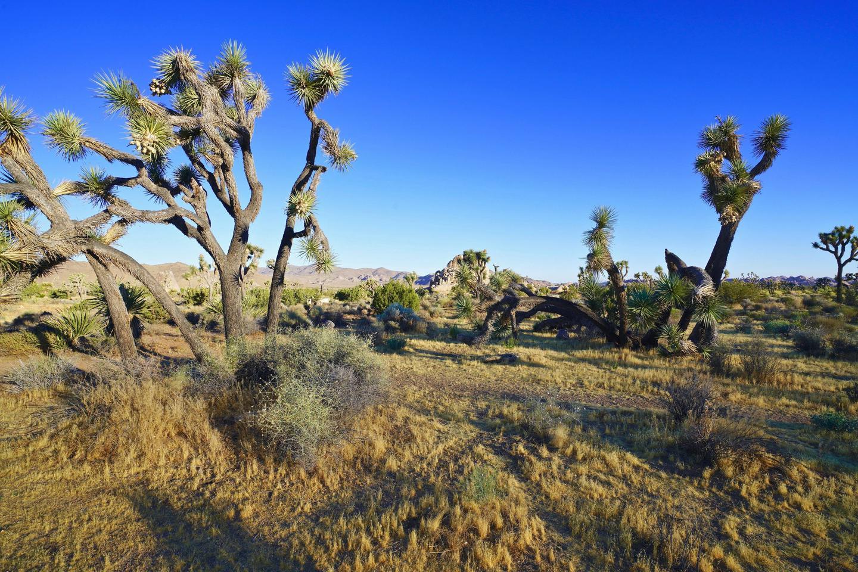 Ryan Campsite 20 (Landscape View)Campsite 20