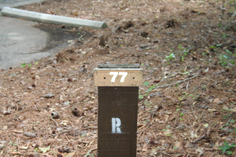 Campsite 77