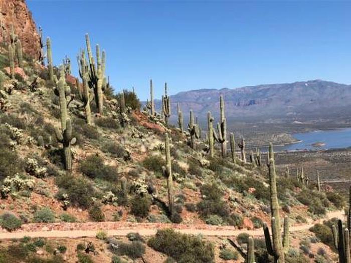 Views of Canyon LakeTNF