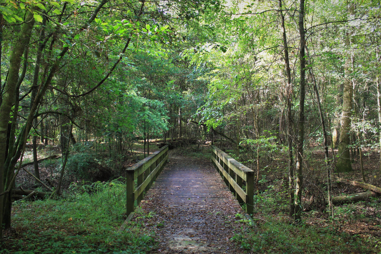 Kirby Nature Trail BridgeSmall wooden bridges guide hikers across waterways on the Kirby Nature Trail.