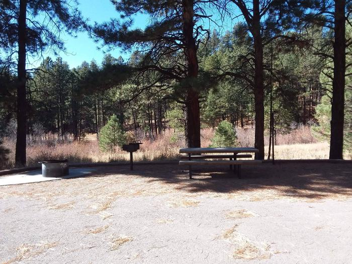 A meadow with young pines sits behind site 2 and its grill, fire pit and picnic table.Site 2