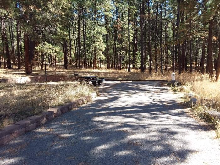 Plenty of pines provide shade at site 6.Site 6 nestled in a grove of ponderosa pine.