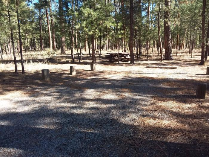 Amidst a grove of pines sits site 21 with a picnic table and fire pit.Site 21 has creek access.