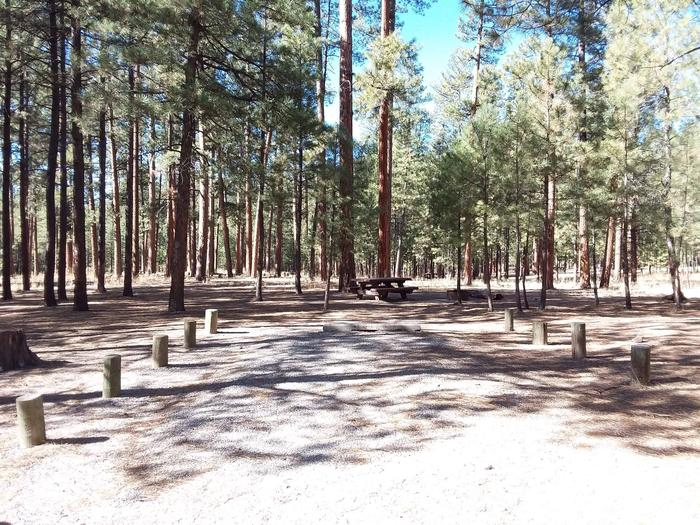 At the end of the driveway at Site 3 pines surround the campsite.Site 3