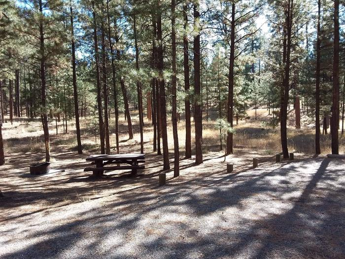 Site 4 contains a picnic table, fire pit and shade from surrounding pines.Site 4