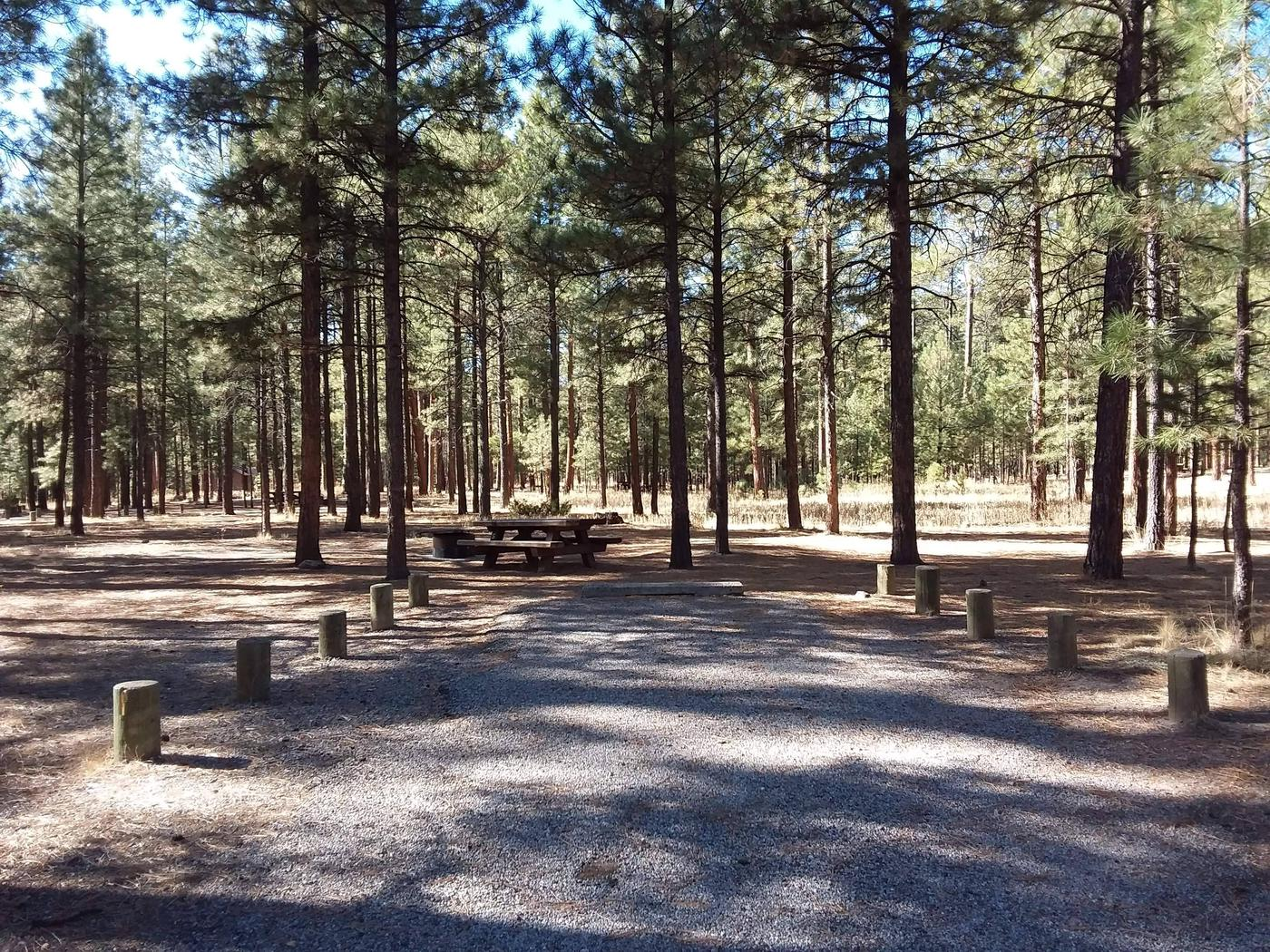 Campsite number 5 has a picnic table, fire pit, and driveway with pines providing shade.Site 5