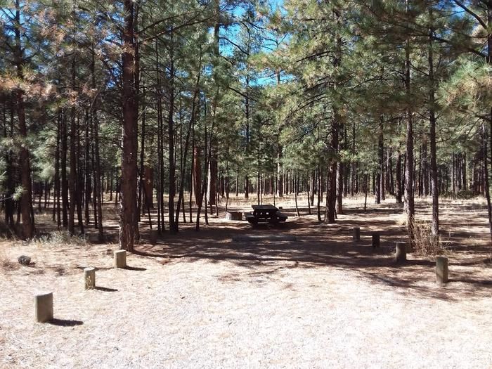 At the end of a sunny driveway sits shady site 7 with a picnic table and fire pit.Site 7