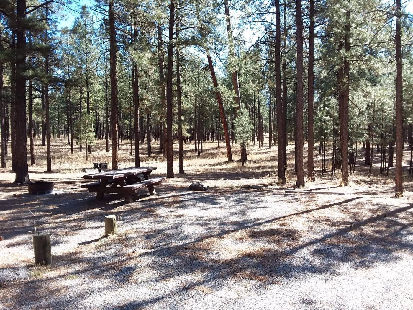 A forest of pines dominate the background of site 8 with its picnic table and fire pit. Site 8