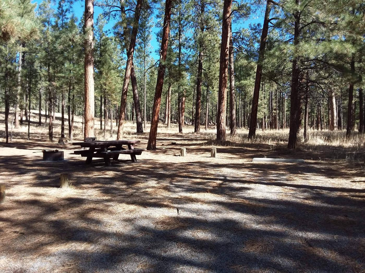 Site 9, shaded by pines, provides a grill, picnic table, and fire pit to enjoy the forested scenery.Site 9