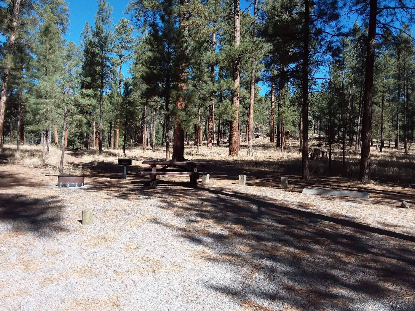 Large pines and clear blue skies accompany site 10 and its fire pit, grill, and picnic table.Site 10