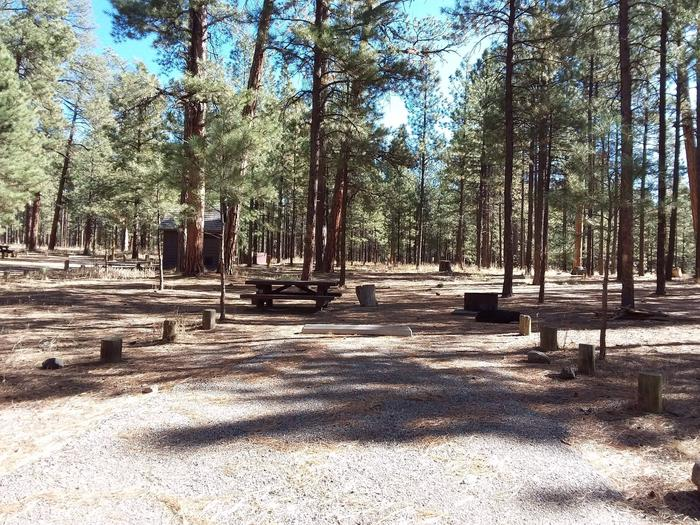Site 11 with a shaded driveway, picnic table,  grill, and pines in the background.Site 11