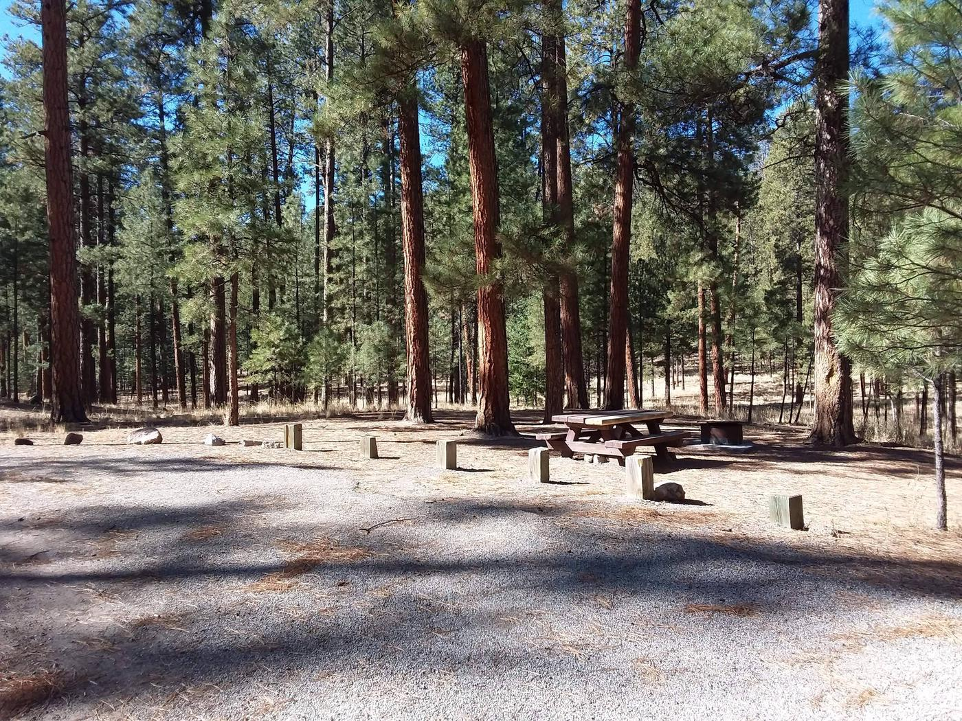 Site 12 has towering pines, a picnic table and fire ring grill combo on site.Site 12