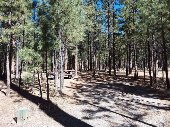 Site 16 has a picnic table and fire pit with pine trees in the vicinity.Site 16