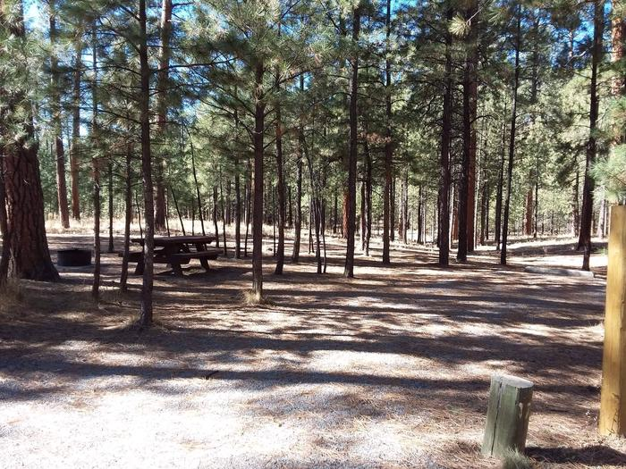 Pine trees shade site 17 and its picnic table and fire pit.Site 17