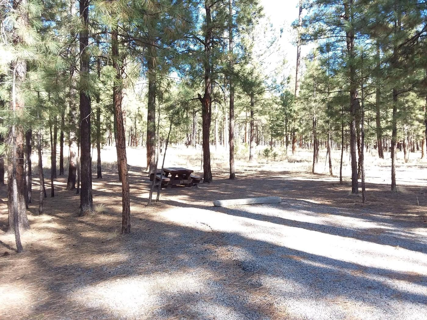 Young pine trees shade site 18 and provides a picnic table with a fire pit.Site 18