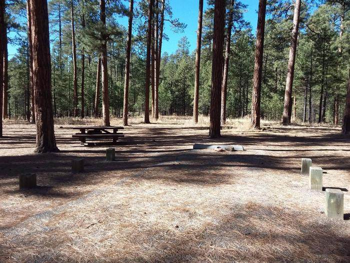 Site 19 has shade from pines and picnic table with a fire pit.Site 19
