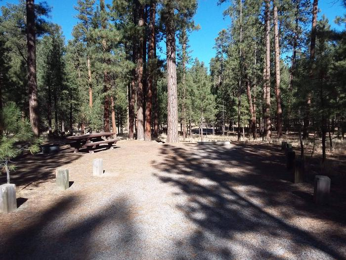 Campsite 36 sits beneath a clear blue sky and tall pines.Site 36