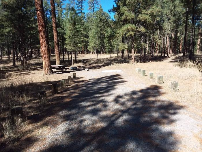 Site 40 has an open driveway, picnic table, and fire pit with surrounding pine trees.Site 40