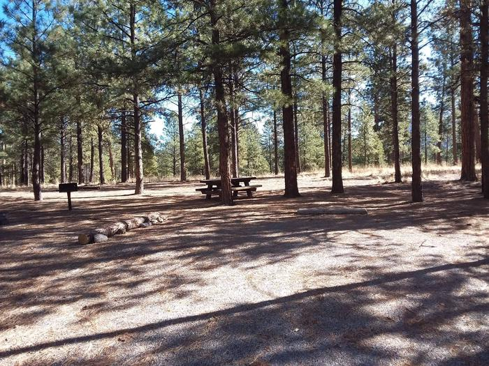 Site 49 has shade from pine trees and includes a picnic table and fire pit.Site 49