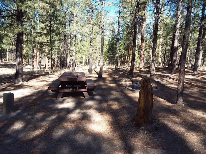 Site 50 provides shade, a picnic table, and a fire pit with plenty of shade from pines.Site 50