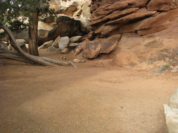 Tent placement space in the sand near a tree and slickrock.