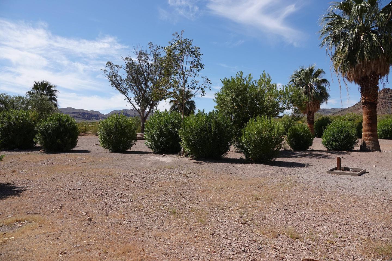 Campsite 1 located in a desert settingBoulder Beach Group Site 1