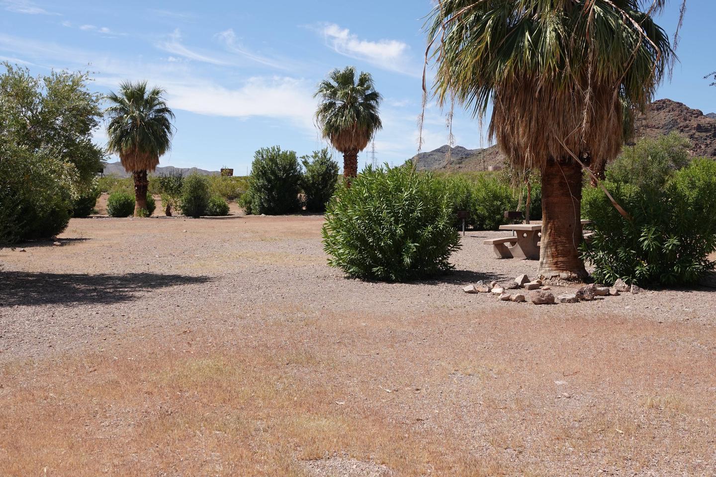 Campsite 5 located in a desert settingBoulder Beach Group Site 5