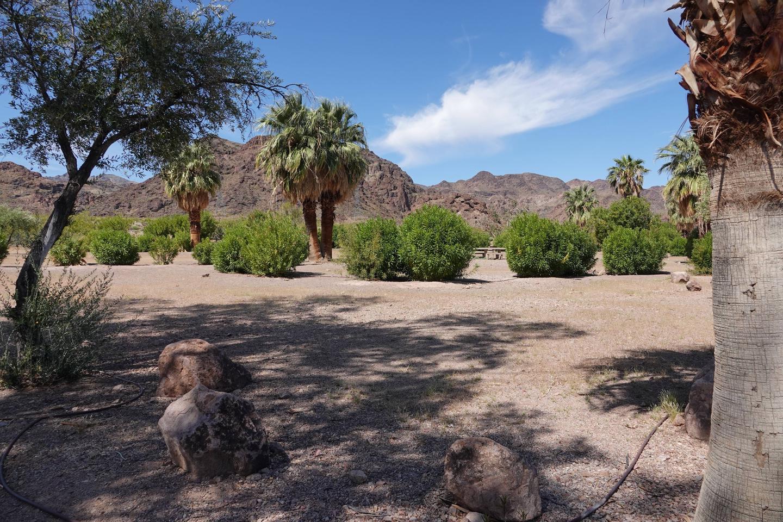 Campsite 2 located in a desert settingBoulder Beach Group Site 2