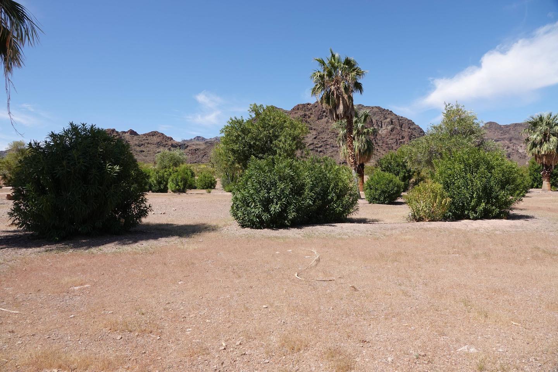 Open Campsite located in a desert settingBoulder Beach Group Site 3